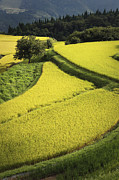 Hyogo Prefecture Prints - Such As Rice Fields Patchwork Print by Seiji NAKAI