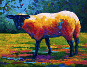 Marion Rose Art - Suffolk Ewe III by Marion Rose