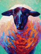 Marion Rose - Suffolk Ewe