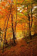 Orange Trees Prints - Sugar Maple Pass in Fall Colors Print by Sean Cupp