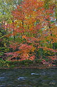Autumn Prints Posters - Sugar Maple Poster by Phill  Doherty