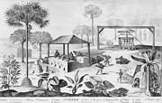 Slaves Prints - Sugar Production In The West Indies Print by Everett
