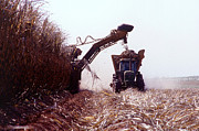 Farming Equipment Photos - Sugarcane Harvest by Photo Researchers