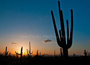 Tucson Originals - Suguaro Sunset by Jim Chamberlain
