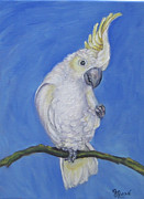 Bird Prints Paintings - Sulfur Crested Cockatoo by Gayle Rene