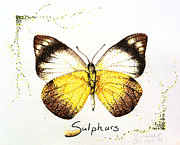 Dot Drawings Framed Prints - Sulphurs - Butterfly Framed Print by Katharina Filus