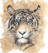 Scottsdale Art League Drawings Prints - Sumatra Print by Debra Jones