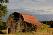 Diane Merkle - Summer Barn