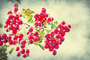 Summer Berries Print by Angela Doelling AD DESIGN Photo and PhotoArt