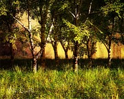 Birch Acrylic Prints - Summer Birch Trees Acrylic Print by Bob Orsillo