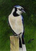 Bluejay Painting Metal Prints - Summer Bluejay Metal Print by Melody Lea Lamb