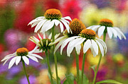 Coneflowers Photos - Summer Canvas by Donna Eaton