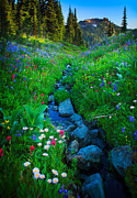 Mt. Rainier Photos - Summer Creek by Inge Johnsson