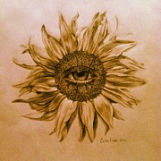 Sunflowers Drawings - Summer Daze by Callie Fink