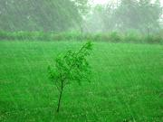 Fence Row Photos - Summer Downpour by Karen Wallace