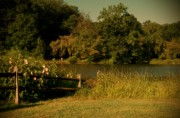 Monmouth County Park Prints - Summer Dream - Holmdel Park Print by Angie McKenzie