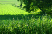 Farmland Art - Summer fields of green by Sandra Cunningham