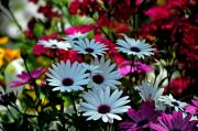Summer Flowers Photos - Summer Flowers by Robert Meanor