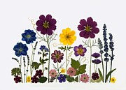 Phlox Mixed Media Prints - Summer Garden2 Print by Ellie Roden