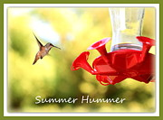 Cute Bird Photos - Summer Hummer Poster by Carol Groenen