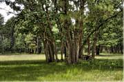 Saija  Lehtonen - Summer in the Pines