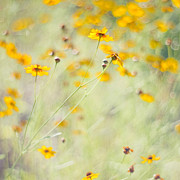 Wildflowers Photo Posters - Summer Invitation Poster by Joel Olives