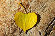 Yellow And Brown Posters - Summer Love Heart Shaped Leaf Poster by Tracie Kaska