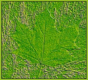 Maple Leaf Digital Art - Summer Maple Leaf by Will Borden