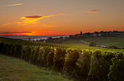 Riquewihr Prints - Summer morning in French vineyards Print by Anneke Schram
