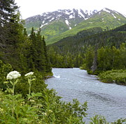 Claire Pridgeon - Summer on the Kenai...
