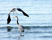 Herons Metal Prints - Summer Parasol Metal Print by Barbara  White