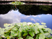 Garden Scene Originals - Summer Reflections by Zafer Gurel