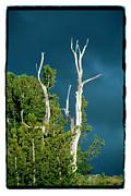 Summer Storm - Tuolumne Meadows Print by Noah Brooks