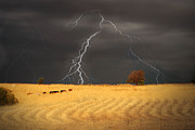 Lightening Prints - Summer Storm Print by Mark Richards
