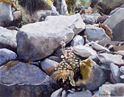 Rocks Painting Posters - Summer Streambed Poster by Sharon Freeman