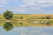 Refection Prints - Summer Time in Colorado Print by James Steele
