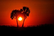 Beach Digital Art Originals - Sun Between 2 Palms by Michael Thomas