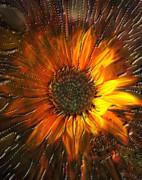 Kevin Caudill - Sun burst