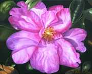 Camelia Posters - Sun-kissed Camelia Poster by Therese Alcorn