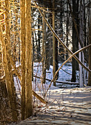 Orchard Trail Prints - Sun Light on the snow covered trail Print by LeeAnn McLaneGoetz McLaneGoetzStudioLLCcom