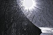 Delaware River Prints - Sun over Barbed Wire Print by Bill Cannon
