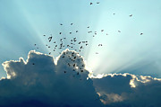 Sun Ray Aerobatics Blue Sky Print by Carolyn Marshall