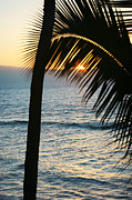 Sihlouette Posters - Sun Setting Behind the Palm Poster by Marilyn Hunt