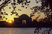Cherry Blossoms Framed Prints - Sun Setting Over The Jefferson Memorial Framed Print by Kenneth Garrett