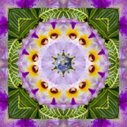 Mandalas Prints - Sun Shower Print by Bell And Todd