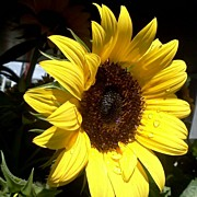 Floral Art - #sun #sunflower #flowers #flower by Heather Wood