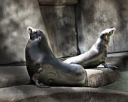 Mary Almond - Sunbathing Seals