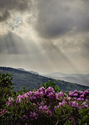 Mountain Photographs Posters - Sunbeams and Rhododendron Poster by Rob Travis