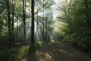 Dirt Roads Photos - Sunbeams Cut Through The Morning Mist by George Grall