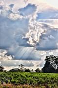 Country Scenes Metal Prints - Sunbeams On The Cotton Patch Metal Print by Jan Amiss Photography